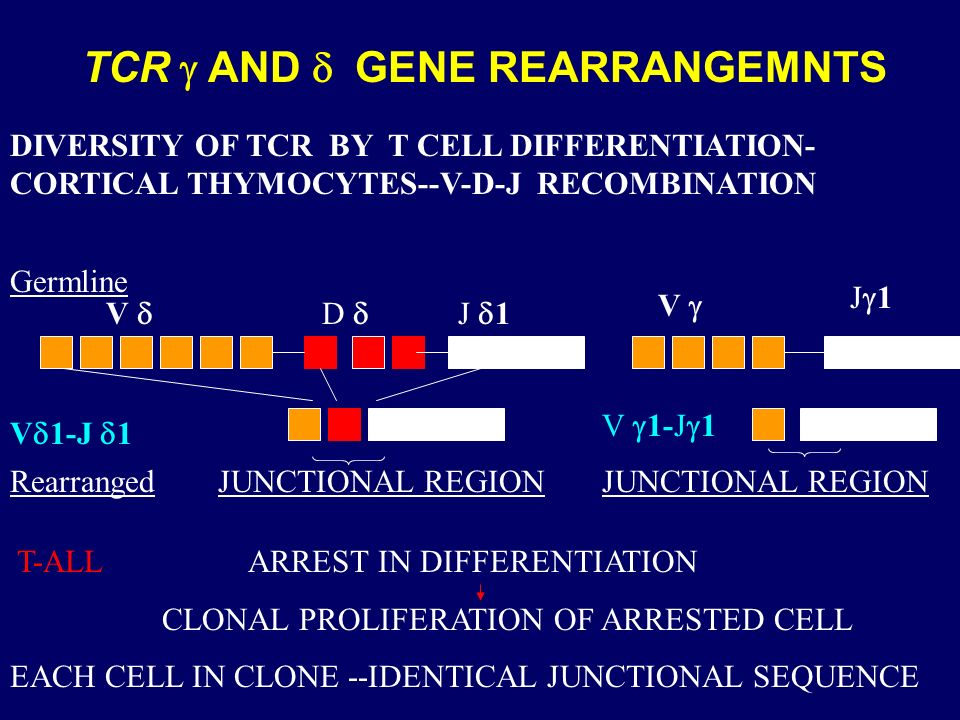 TCR g AND d GENE REARRANGEMNTS