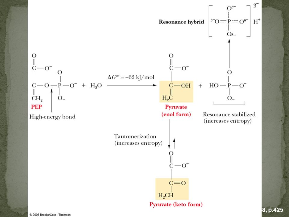 FIGURE 15.8 When phosphoenolpyruvate is hydrolyzed to pyruvate and phosphate, it results in an increase in entropy. Both the formation of the keto form of pyruvate and the resonance structures of phosphate lead to the increase in entropy.