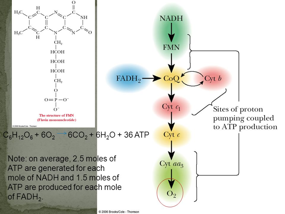 C6H12O6 + 6O2 6CO2 + 6H2O + 36 ATP