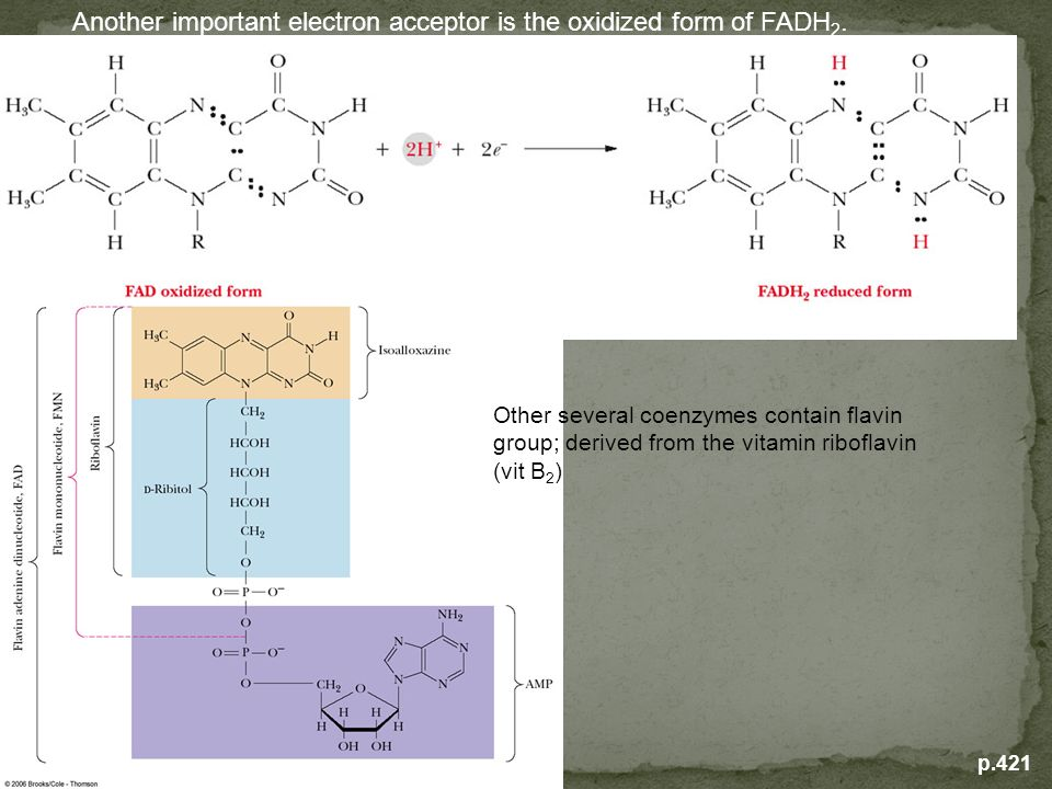 Another important electron acceptor is the oxidized form of FADH2.