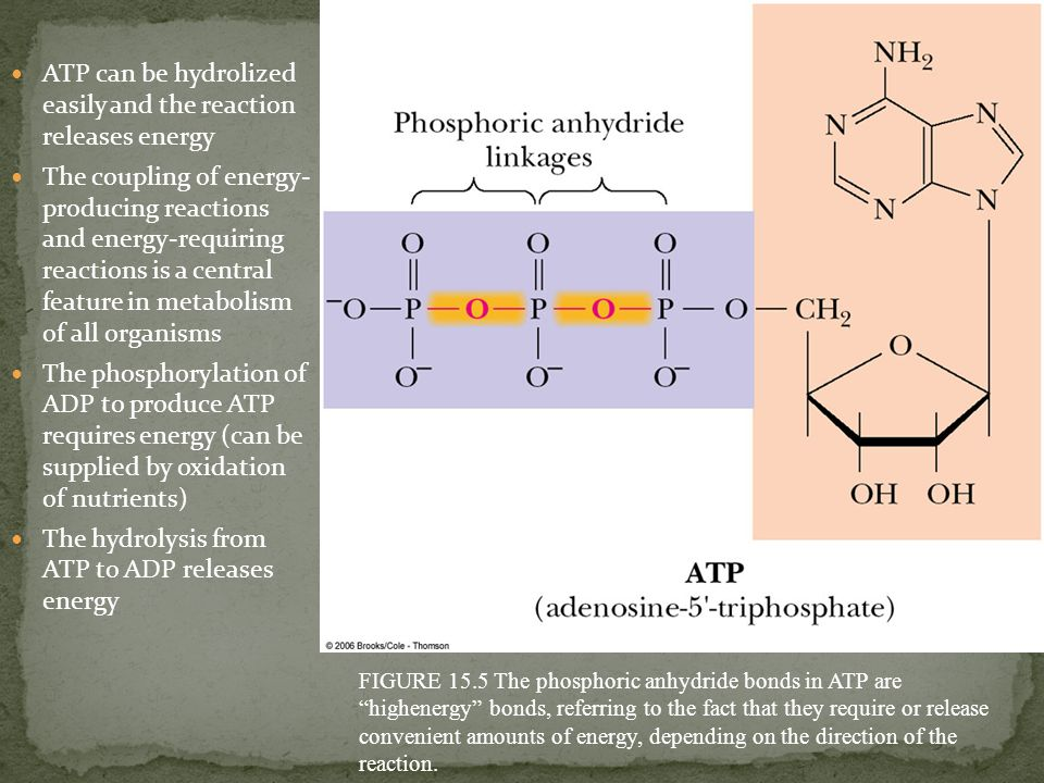 ATP can be hydrolized easily and the reaction releases energy