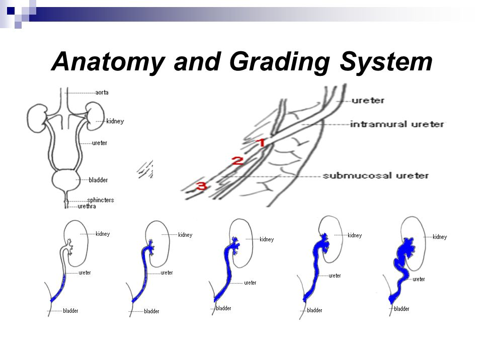 Anatomy and Grading System