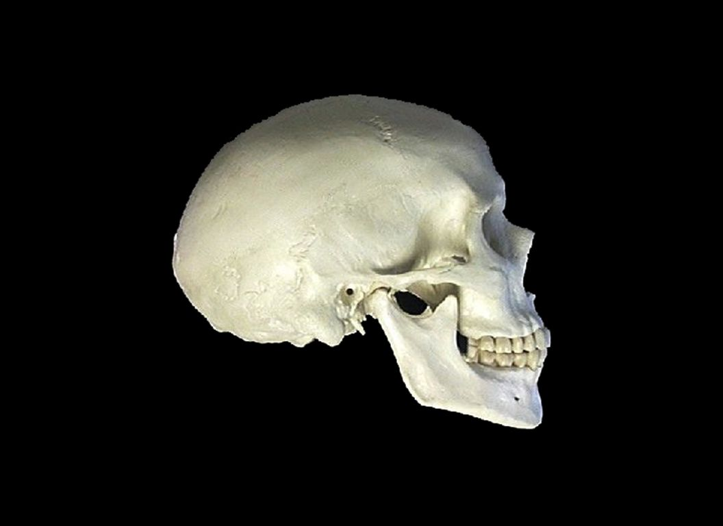 The major cause of faulty Proprioception to the brain in today's population is the under development of the skull.