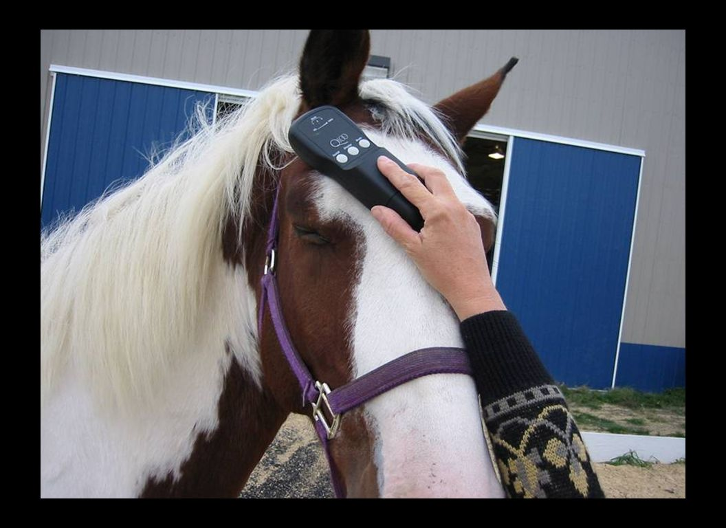 Low Level Lasers can also be used for calming excited horses that are difficult to get into race and roping gates.