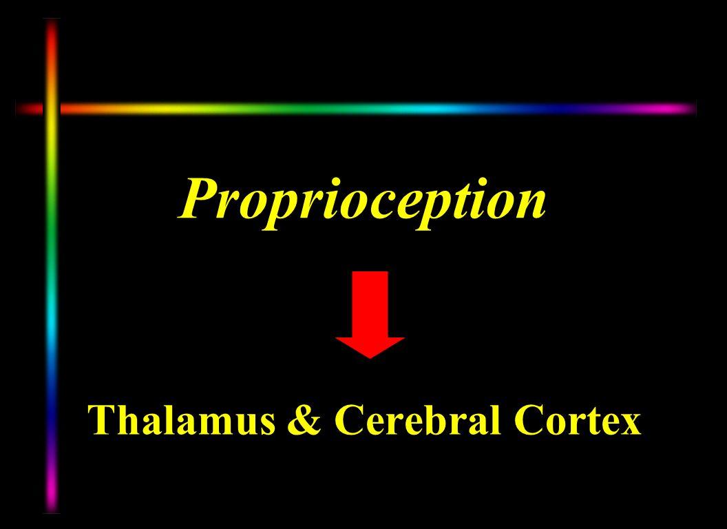 Thalamus & Cerebral Cortex