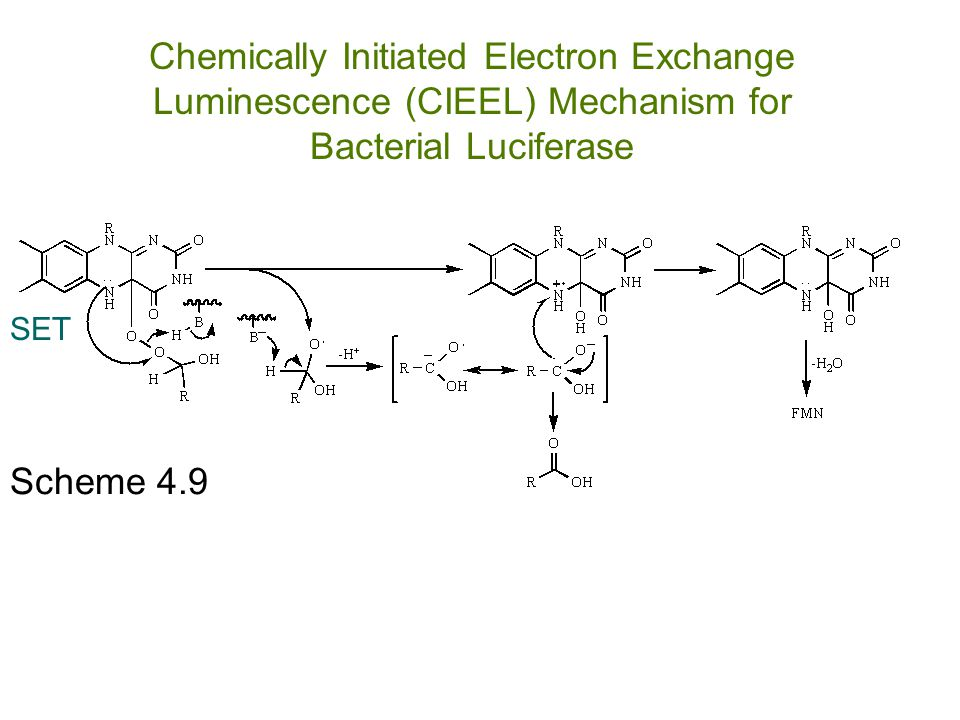 Chemically Initiated Electron Exchange Luminescence (CIEEL) Mechanism for Bacterial Luciferase