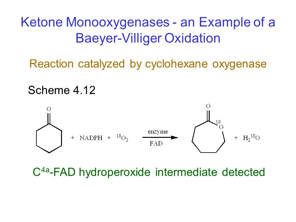Reaction catalyzed by cyclohexane oxygenase
