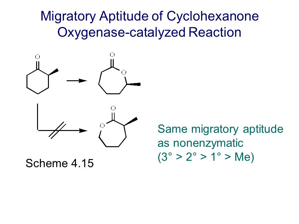 Migratory Aptitude of Cyclohexanone Oxygenase-catalyzed Reaction