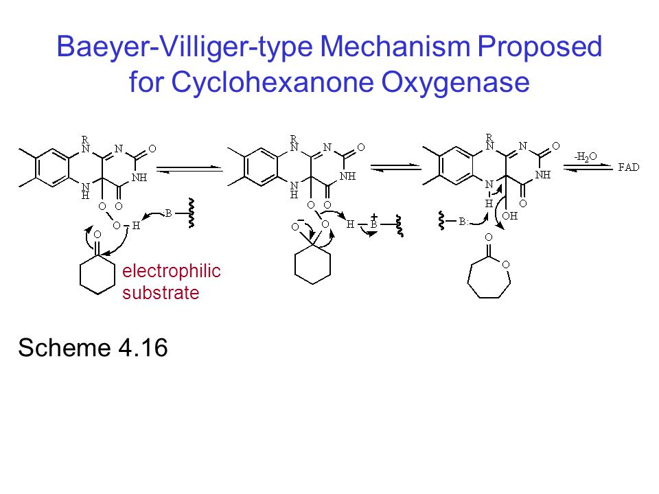 Baeyer-Villiger-type Mechanism Proposed for Cyclohexanone Oxygenase
