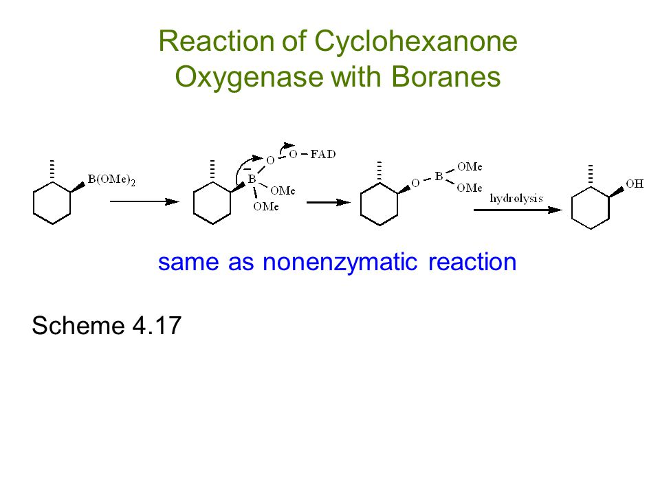 Reaction of Cyclohexanone Oxygenase with Boranes