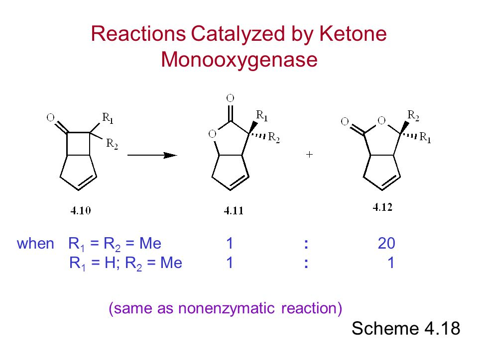Reactions Catalyzed by Ketone Monooxygenase