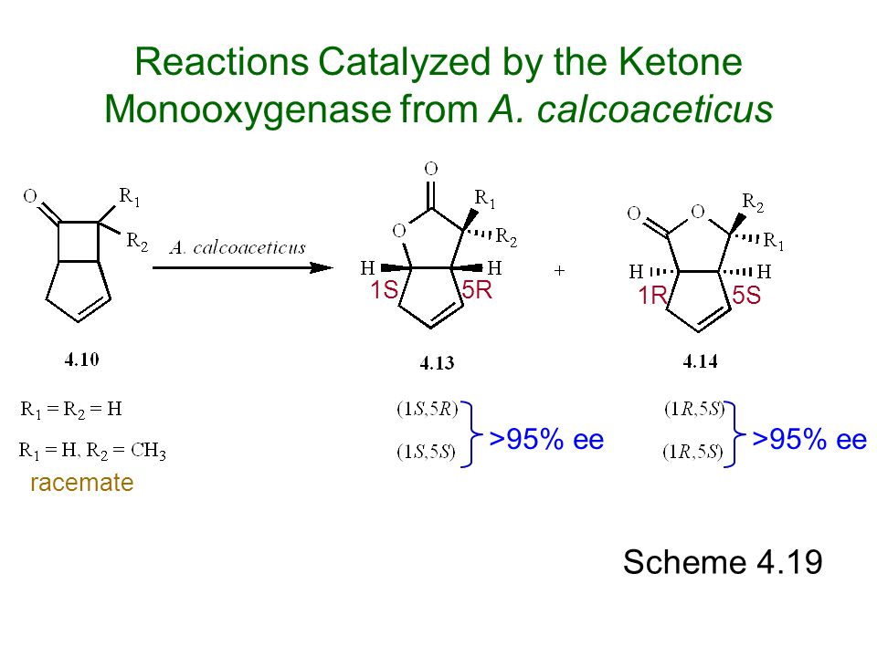 Reactions Catalyzed by the Ketone Monooxygenase from A. calcoaceticus