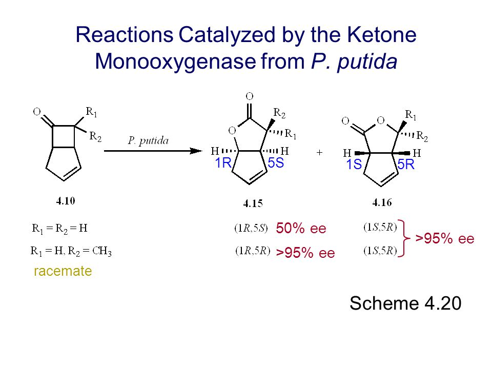 Reactions Catalyzed by the Ketone Monooxygenase from P. putida