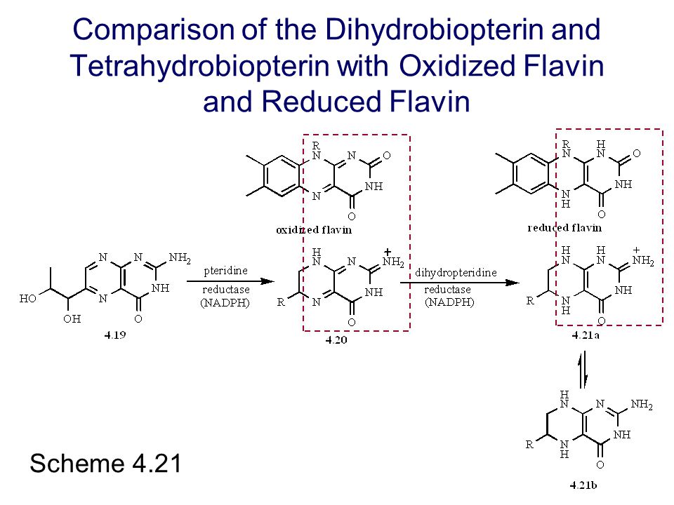 Comparison of the Dihydrobiopterin and Tetrahydrobiopterin with Oxidized Flavin and Reduced Flavin