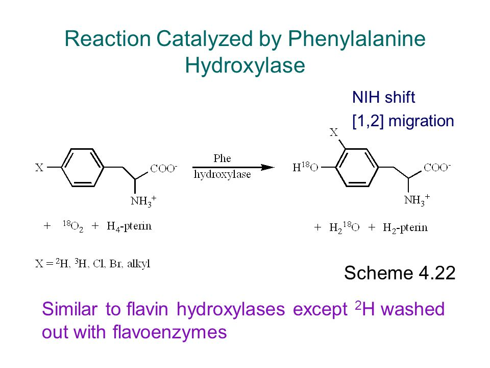 Reaction Catalyzed by Phenylalanine Hydroxylase