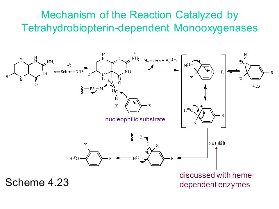 Mechanism of the Reaction Catalyzed by Tetrahydrobiopterin-dependent Monooxygenases