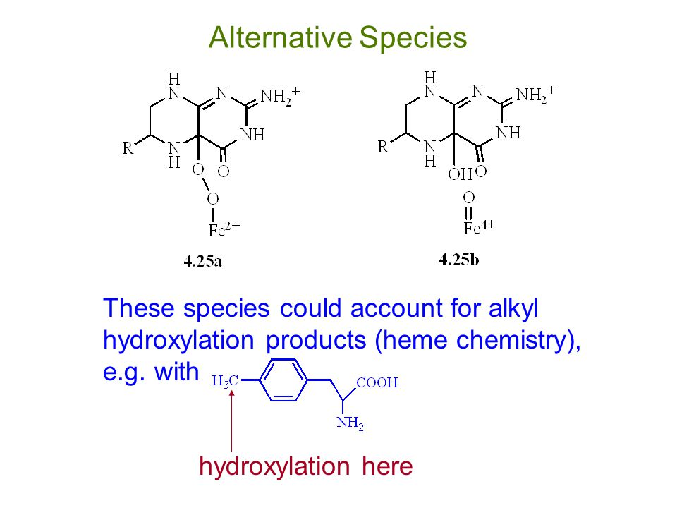Alternative Species These species could account for alkyl hydroxylation products (heme chemistry), e.g. with.