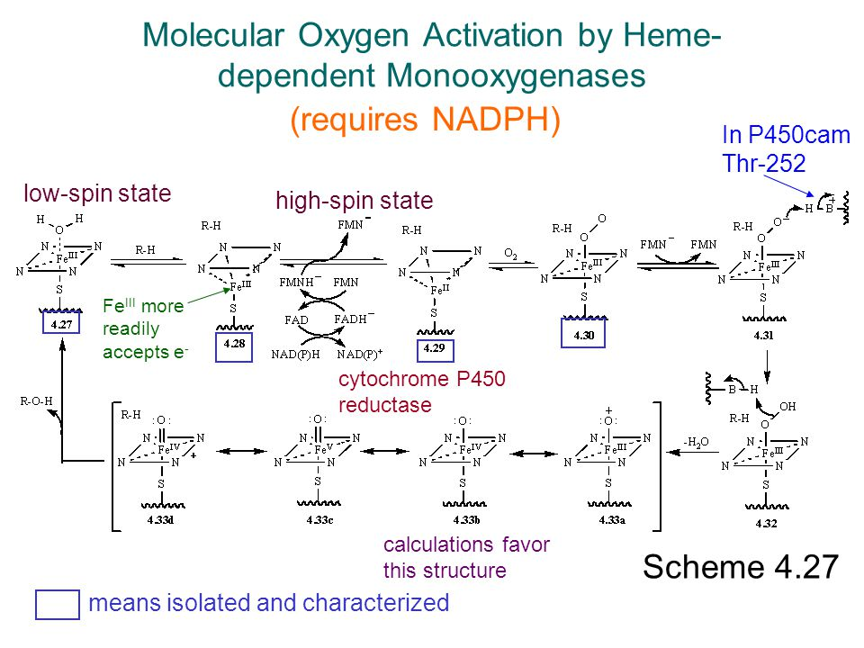 Molecular Oxygen Activation by Heme-dependent Monooxygenases