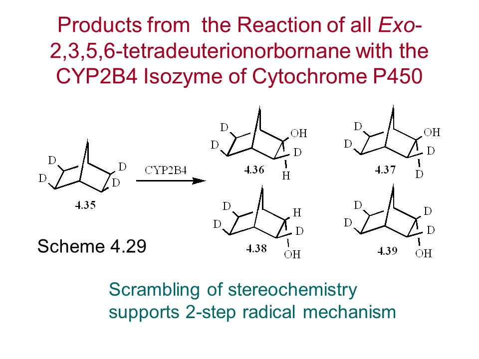 Products from the Reaction of all Exo-2,3,5,6-tetradeuterionorbornane with the CYP2B4 Isozyme of Cytochrome P450