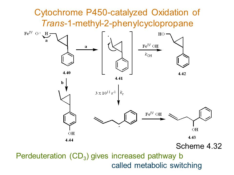 Cytochrome P450-catalyzed Oxidation of Trans-1-methyl-2-phenylcyclopropane