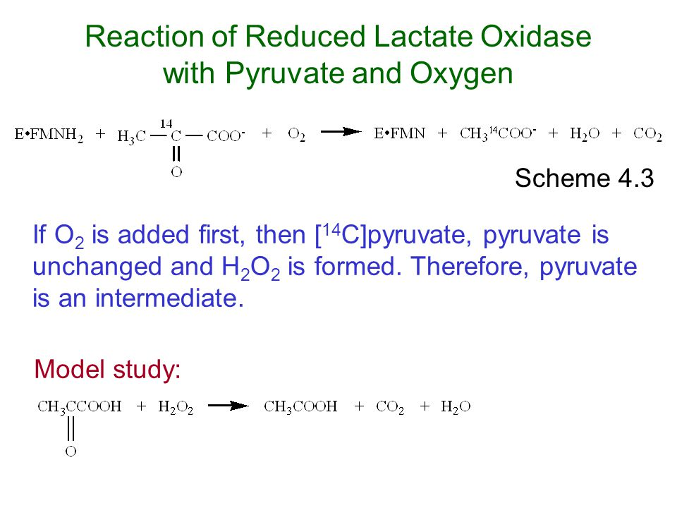 Reaction of Reduced Lactate Oxidase with Pyruvate and Oxygen