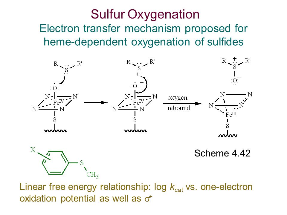 Sulfur Oxygenation Electron transfer mechanism proposed for heme-dependent oxygenation of sulfides.