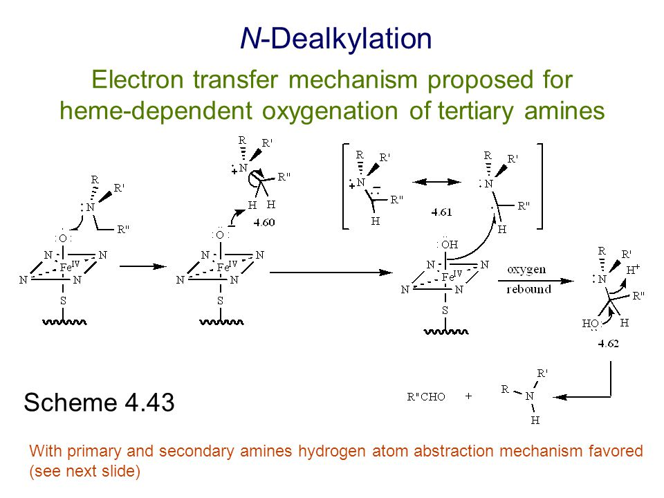N-Dealkylation Electron transfer mechanism proposed for heme-dependent oxygenation of tertiary amines.