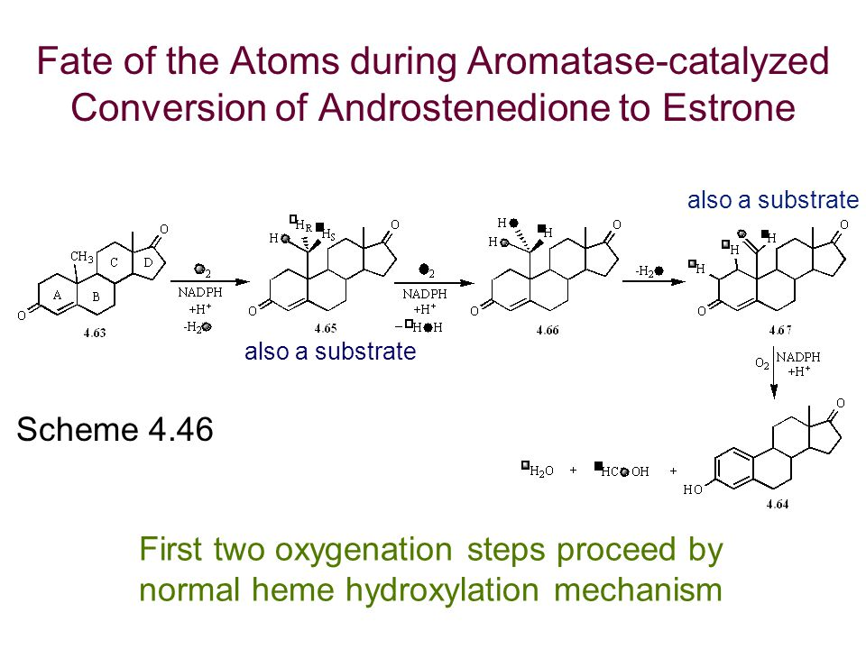 Fate of the Atoms during Aromatase-catalyzed Conversion of Androstenedione to Estrone