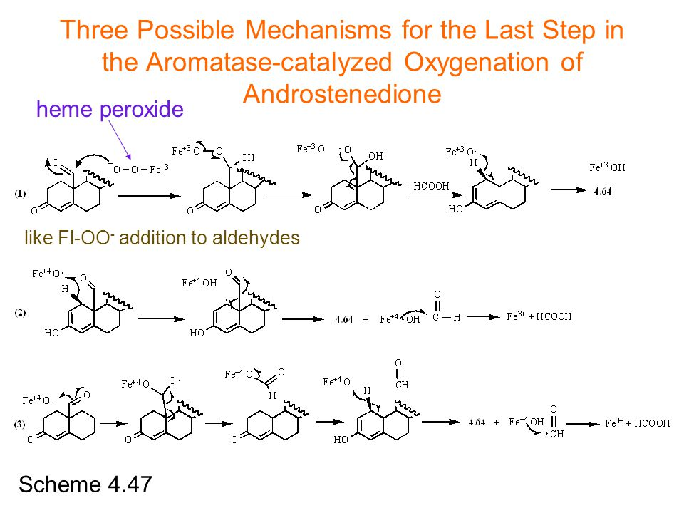 Three Possible Mechanisms for the Last Step in the Aromatase-catalyzed Oxygenation of Androstenedione