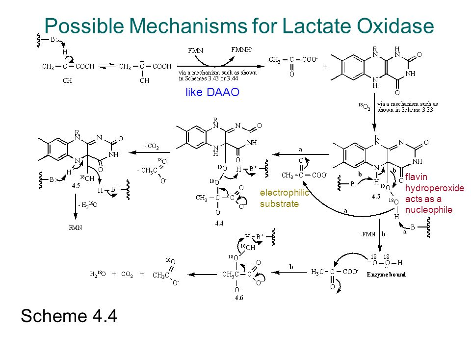 Possible Mechanisms for Lactate Oxidase