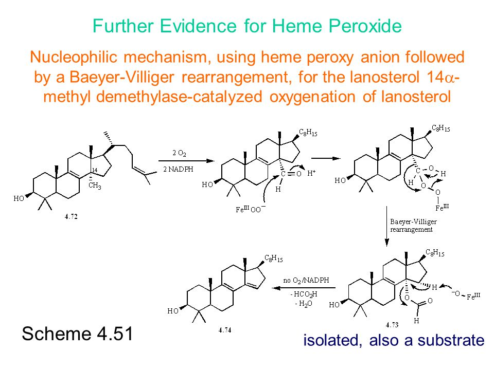 Further Evidence for Heme Peroxide
