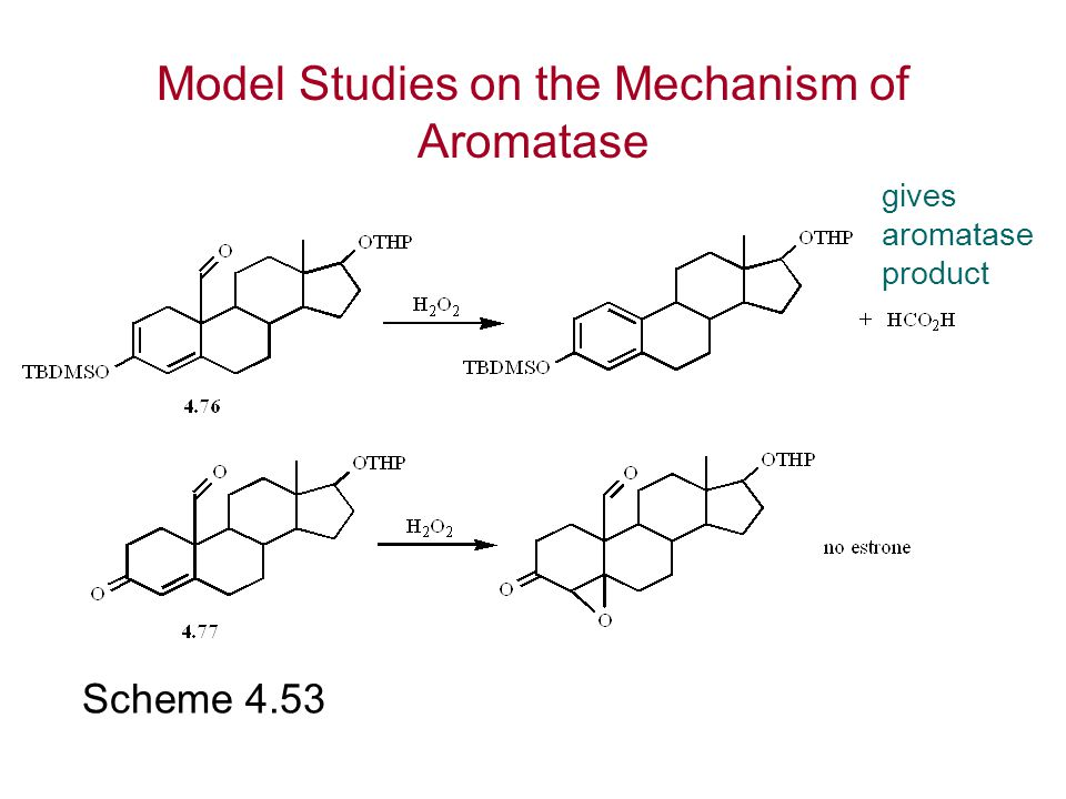 Model Studies on the Mechanism of Aromatase