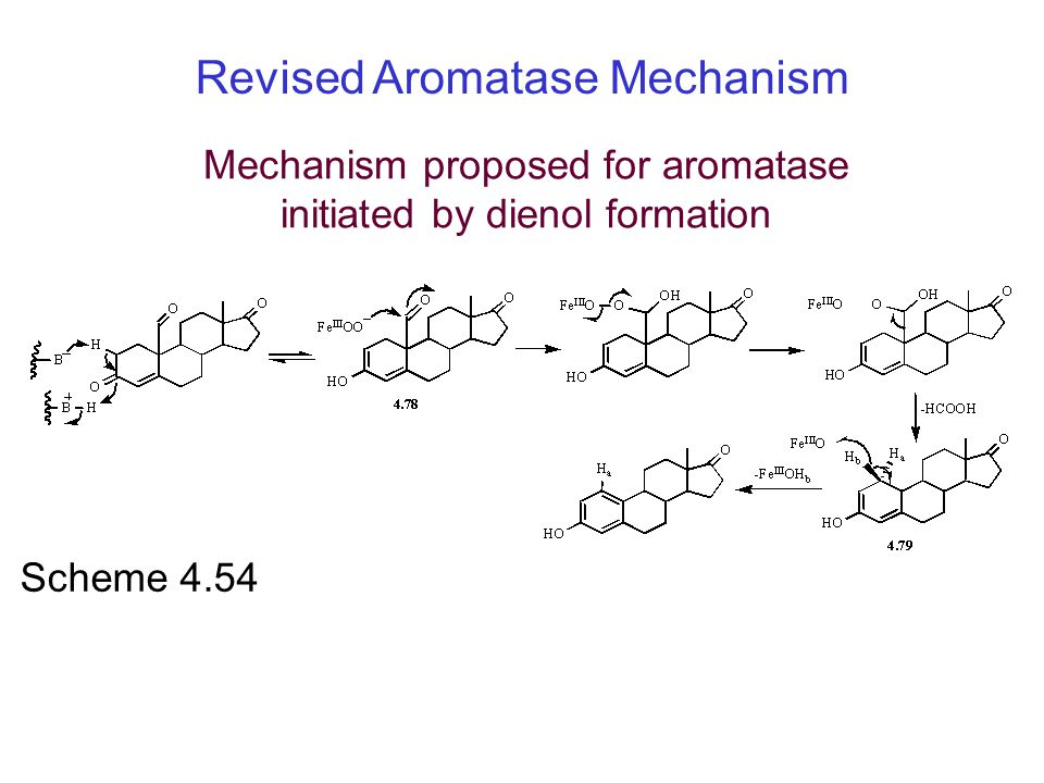 Mechanism proposed for aromatase initiated by dienol formation