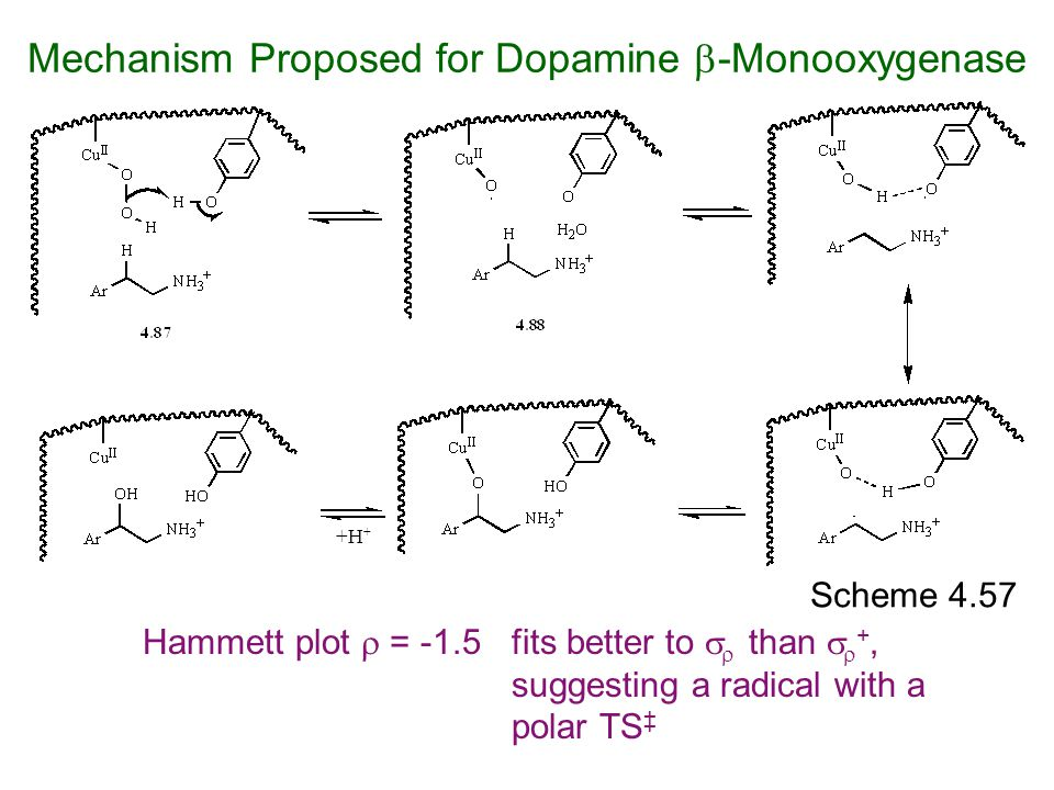 Mechanism Proposed for Dopamine -Monooxygenase