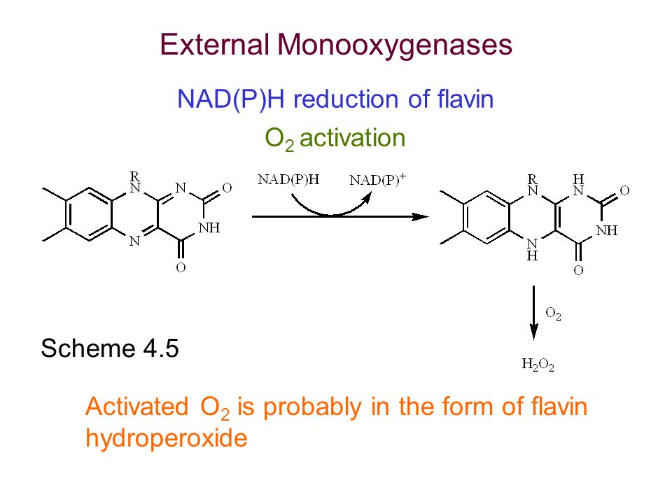 NAD(P)H reduction of flavin