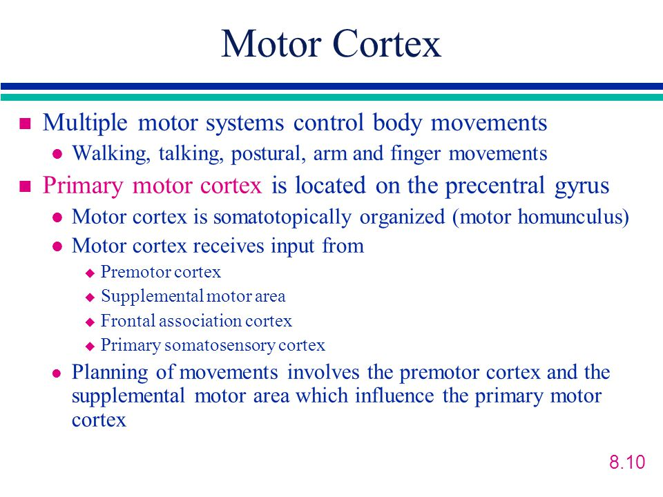 Motor Cortex Multiple motor systems control body movements