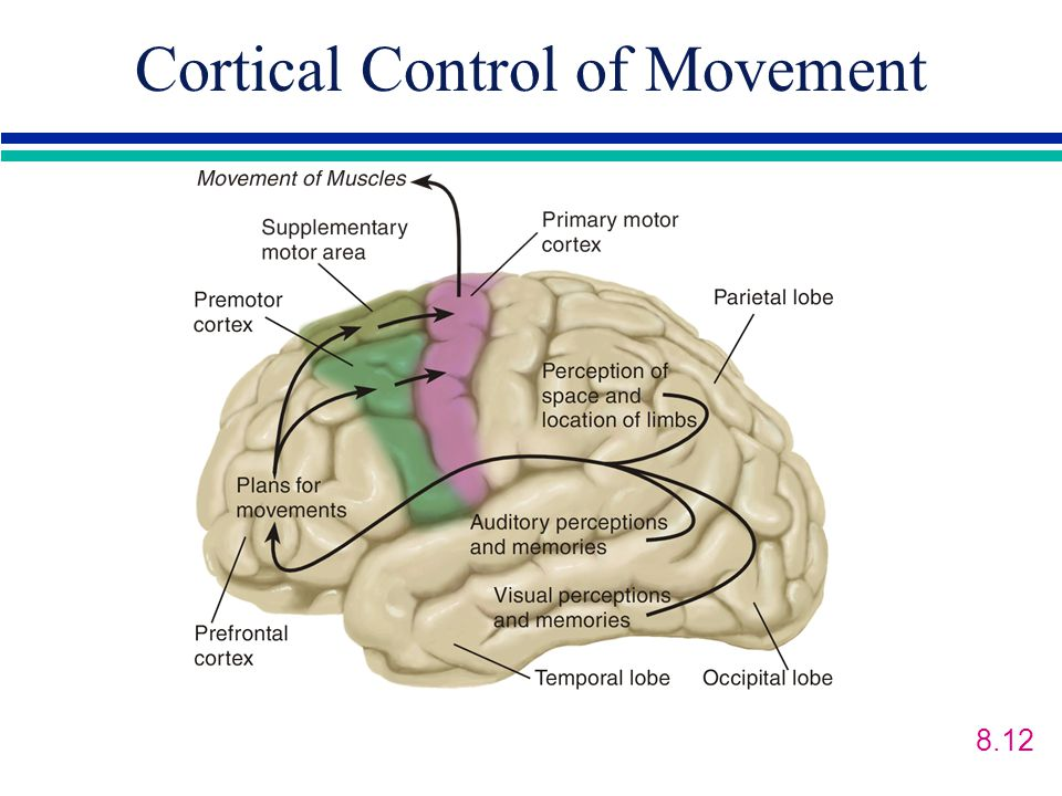 Cortical Control of Movement