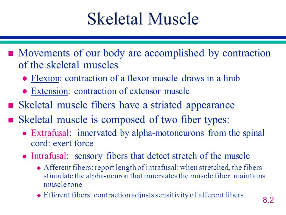 Skeletal Muscle Movements of our body are accomplished by contraction of the skeletal muscles.