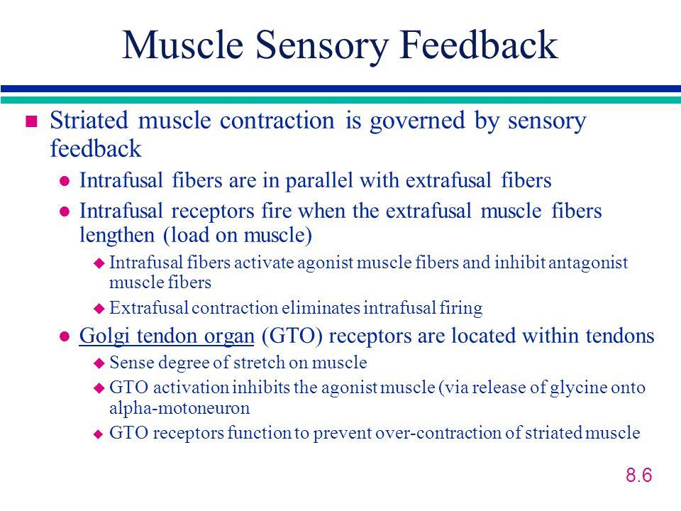 Muscle Sensory Feedback