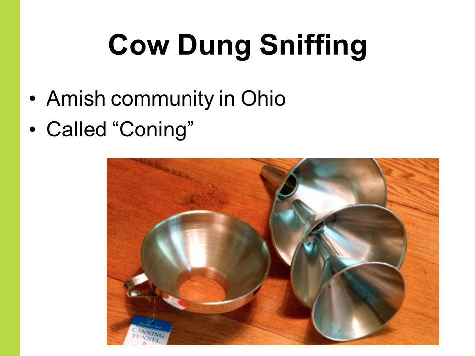 Cow Dung Sniffing Amish community in Ohio Called Coning