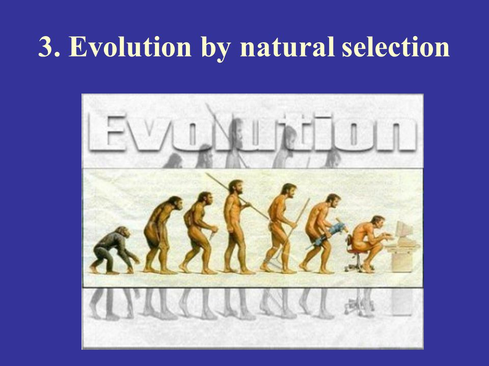 3. Evolution by natural selection