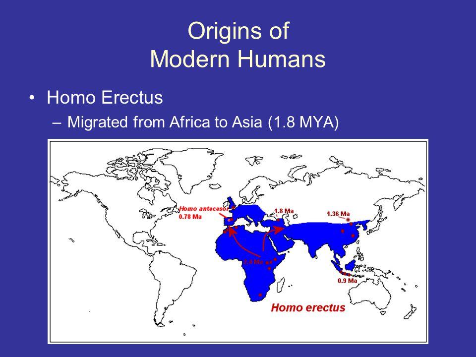 Origins of Modern Humans