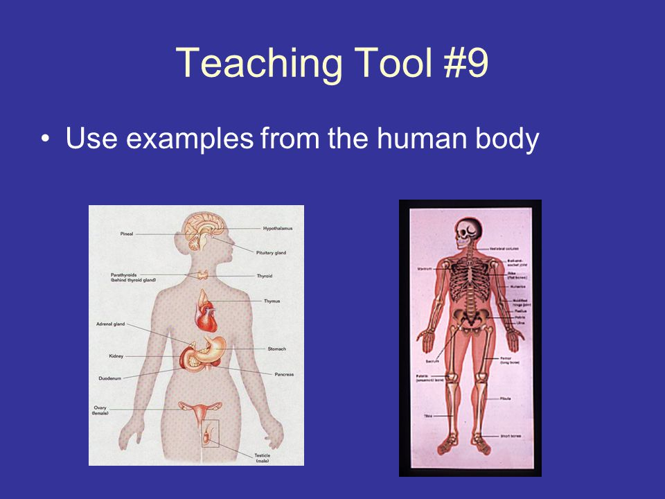 Teaching Tool #9 Use examples from the human body