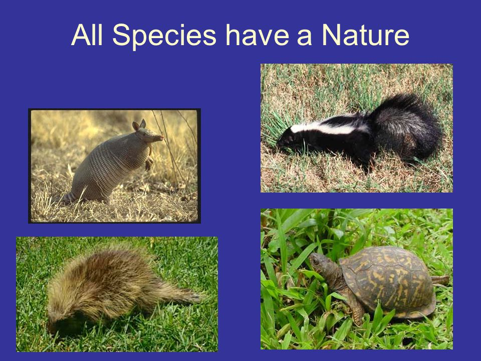All Species have a Nature