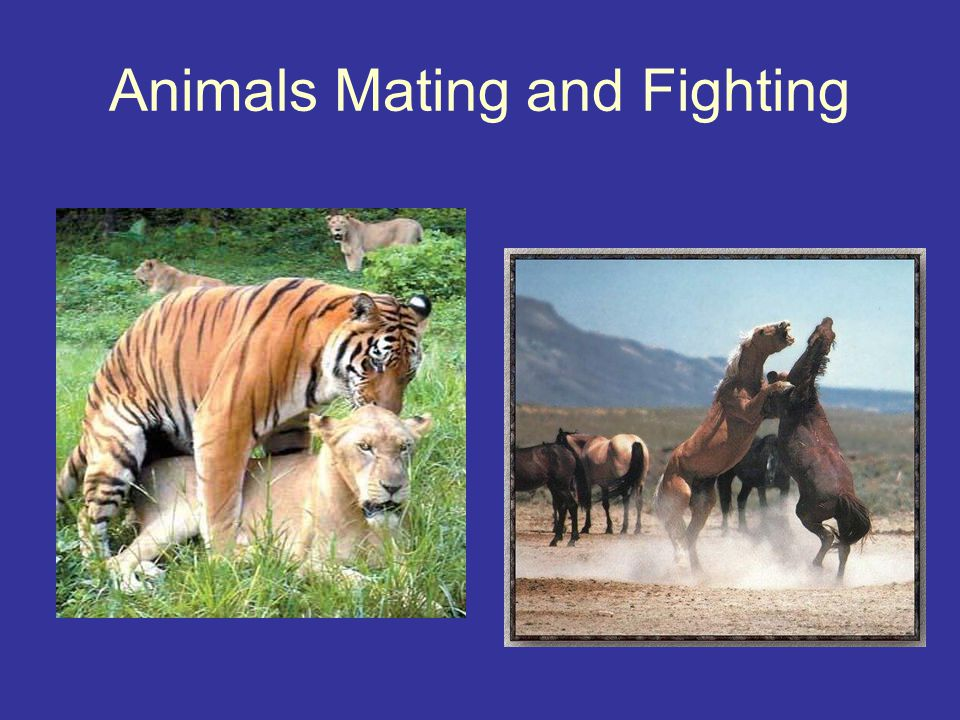 Animals Mating and Fighting