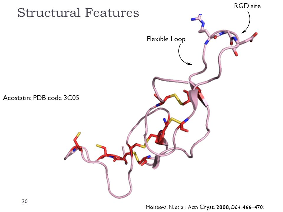 Structural Features RGD site Flexible Loop Acostatin: PDB code 3C05
