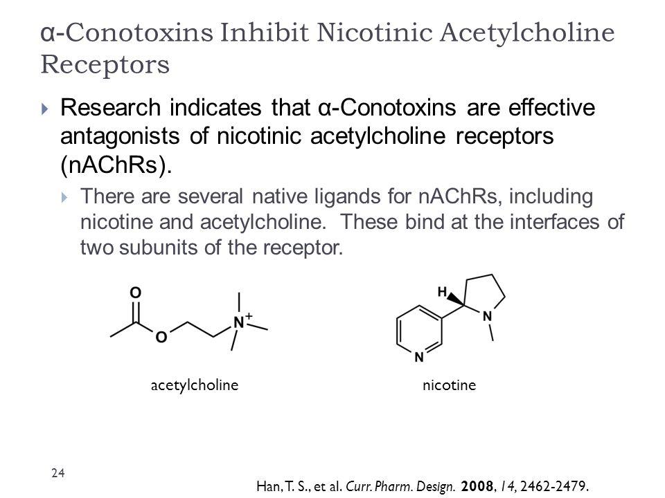 α-Conotoxins Inhibit Nicotinic Acetylcholine Receptors