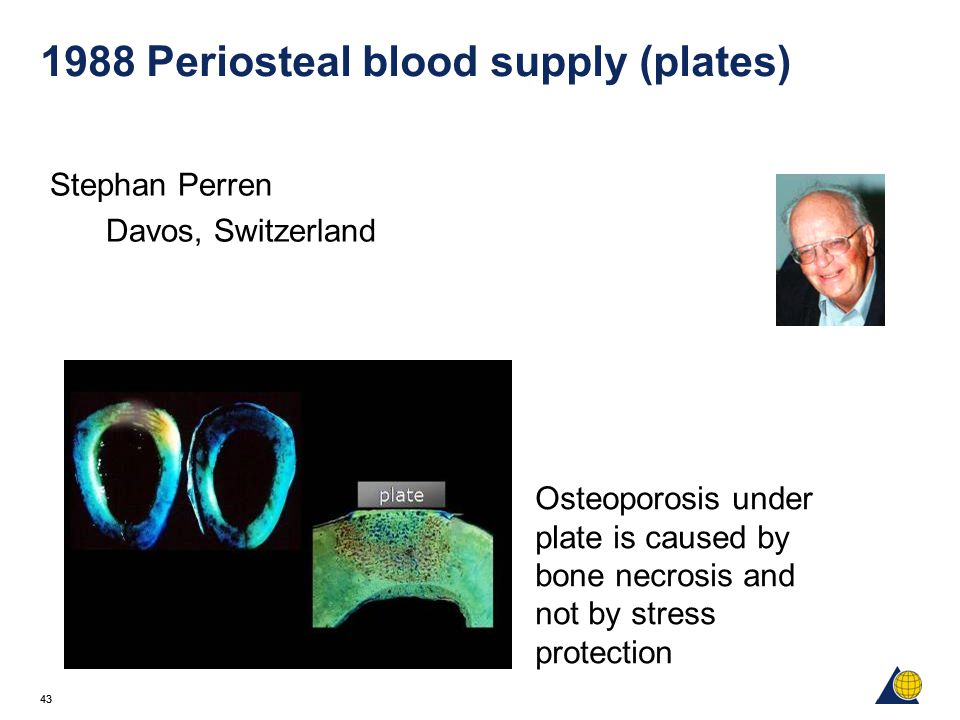 1988 Periosteal blood supply (plates)