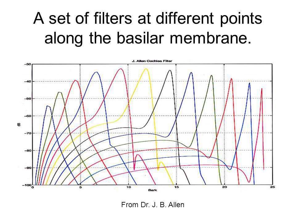 A set of filters at different points along the basilar membrane.