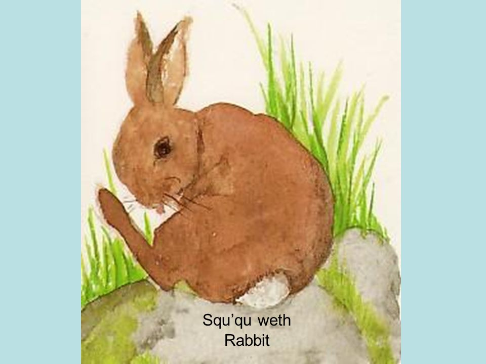 Squ'qu weth Rabbit